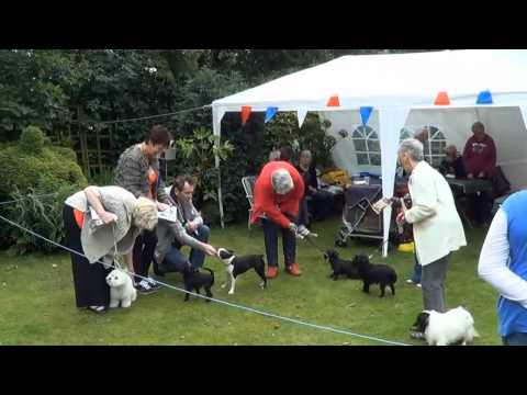 The Pennington Affenpinscher Garden Party 2012.