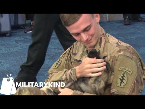 Soldier reunites with puppy he met overseas | Militarykind