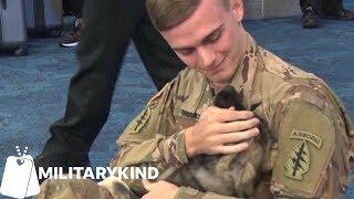 Soldier reunites with puppy he met overseas | Militarykind