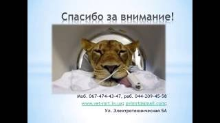 МРТ Животным