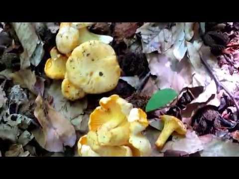 мастер класс по собиранию грибов двухкомнатную