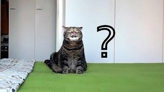 Что кот тайно делает на кровати?; What does cat secretly do on a bed?
