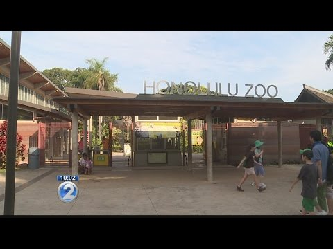 Honolulu Zoo denied re-accreditation over funding concerns