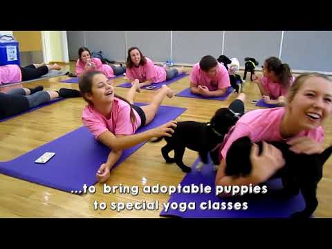 Every Creature Counts PUPPY YOGA