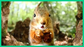 squirrel makes funny sounds
