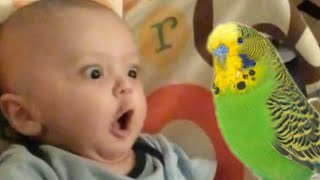 30 Cute Babies Sweet Baby Video Compilation 2016