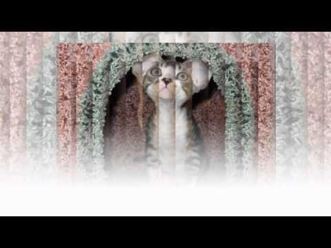 Красивая презентация пород кошек