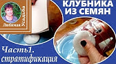Сорт клубники Гигант Джорнея - YouTube
