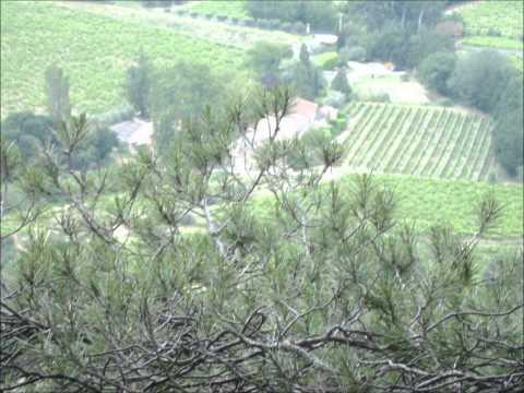 A drive round the Dentelles de Montmirail in Provence
