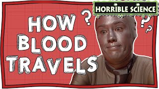 Horrible Science - How Blood Travels around Your Body   Abominable Blood   Fun Science   Nugget