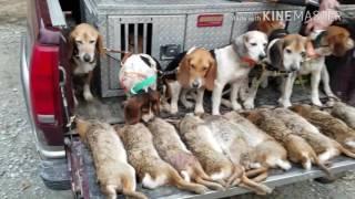 Swamp Rabbit Hunt Feb 18 & 19 2017