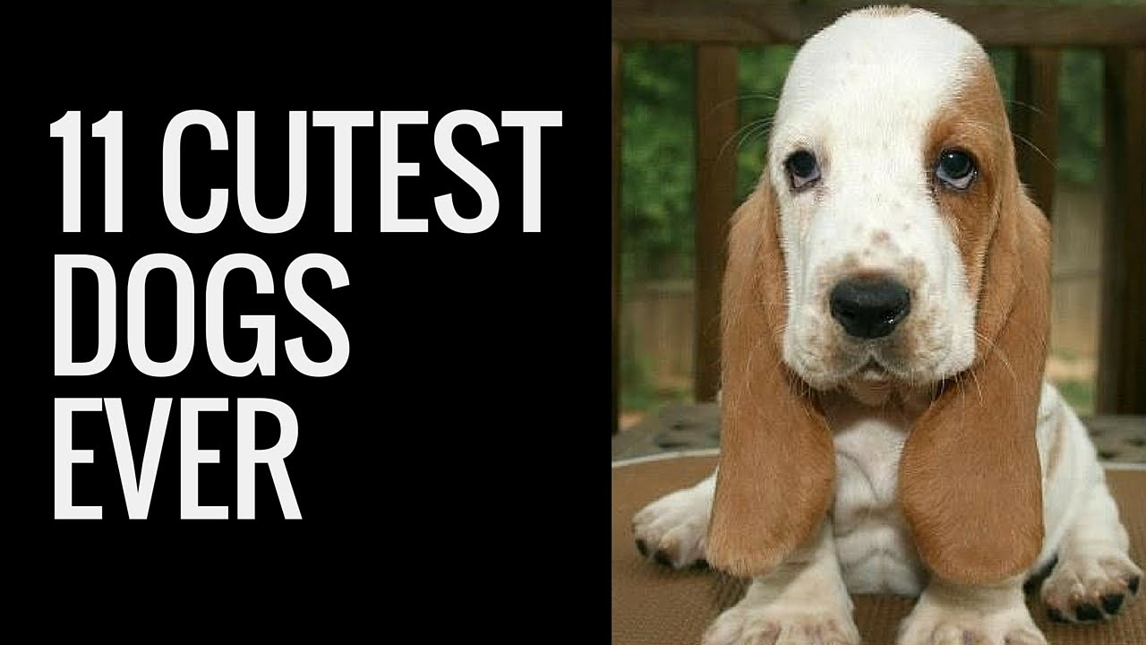 List Of Small Dogs That Don