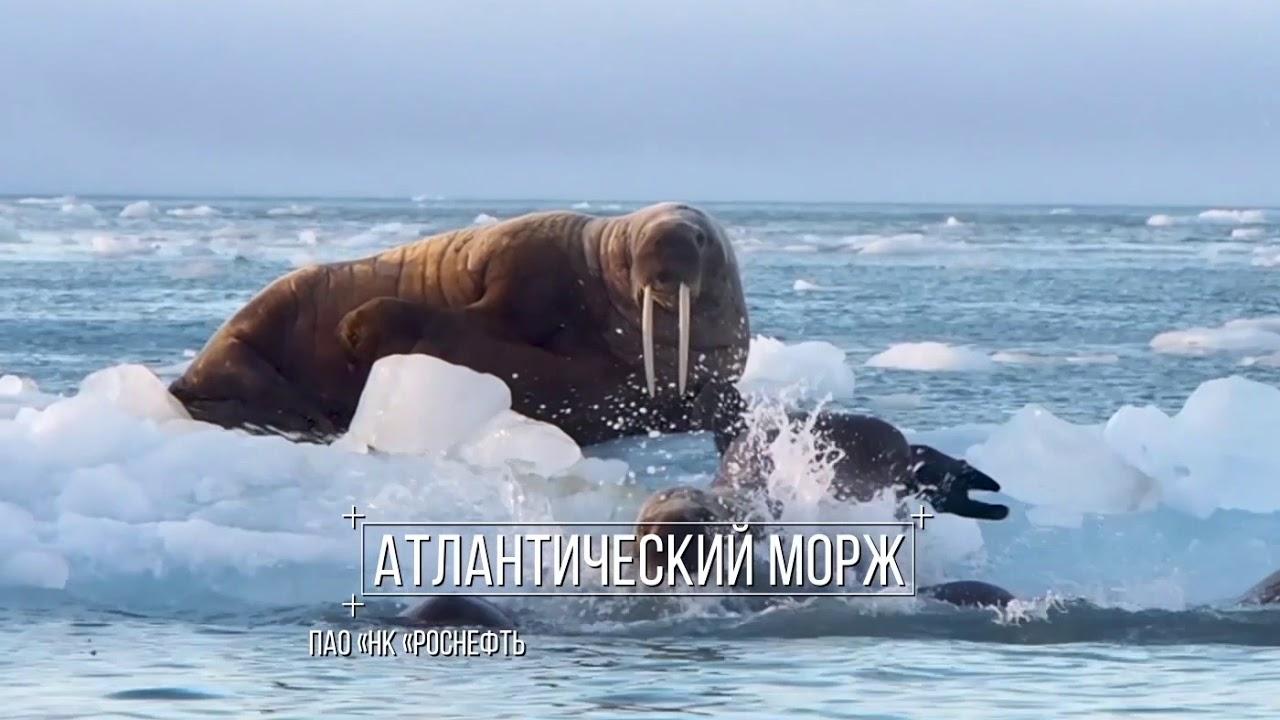 Вклад «Роснефти» в защиту окружающей среды