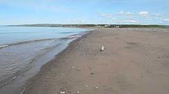 Seagull on Merigomish Beach in PIctou County