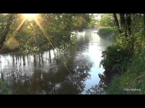 Видео: Река. Природа. Пение птиц. Журчание воды. Солнце в ветвях. Релакс. Медитация