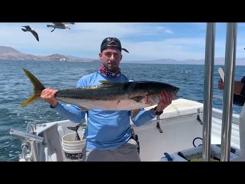 Unreal Baja Fishing Trip - Yellowtail Madness