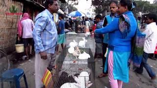 RABBIT, HAMSTER, GUINEA PIG SELLER OF GALIFF STREET MARKET KOLKATA INDIA | 20 TH JAN 2019 VISIT
