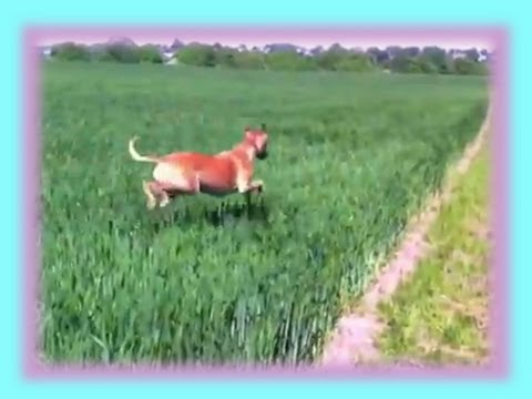 Funny Dog BOUNCES Through Field!