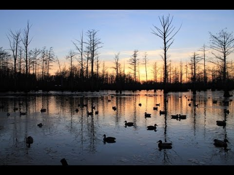 Tatumville Duck Hunting-Cut' Em 2003 duck season