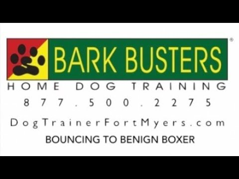 Boxer - NO JUMPING - Dog Training of Fort Myers K9 - Patrick Logue Dog Trainer