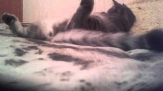 Кошка лежит пластом