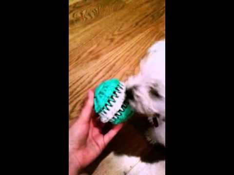 Tester #1 Fibi testuje piłkę z Trixie Denta Fun :)