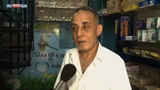 غزة.. تجارة الطيور مصدر للرزق