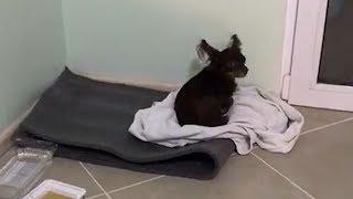 Уфимская собака потерялась в Анапе