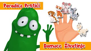 PORODICA PRSTICI - DOMACE ZIVOTINJE - SONG 1