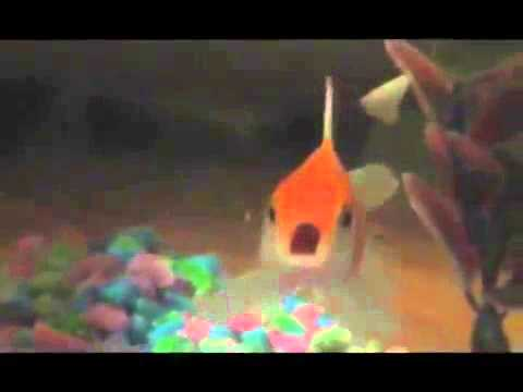 The Rapping Goldfish (original Footage)