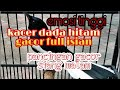 Kacer Dada Hitam Gacor Full Isian Kacer Lain Langsung Emosi Nyaut Buka Paruh  Mp3 - Mp4 Download