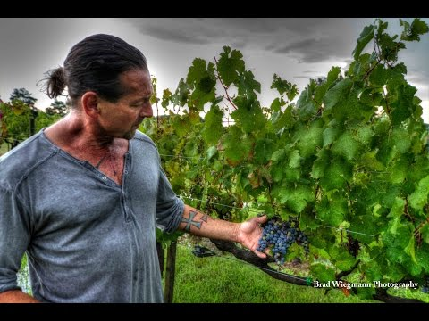 Jules out in the vineyard talking about growing grape at Jules J  Berta Winery in Alabama