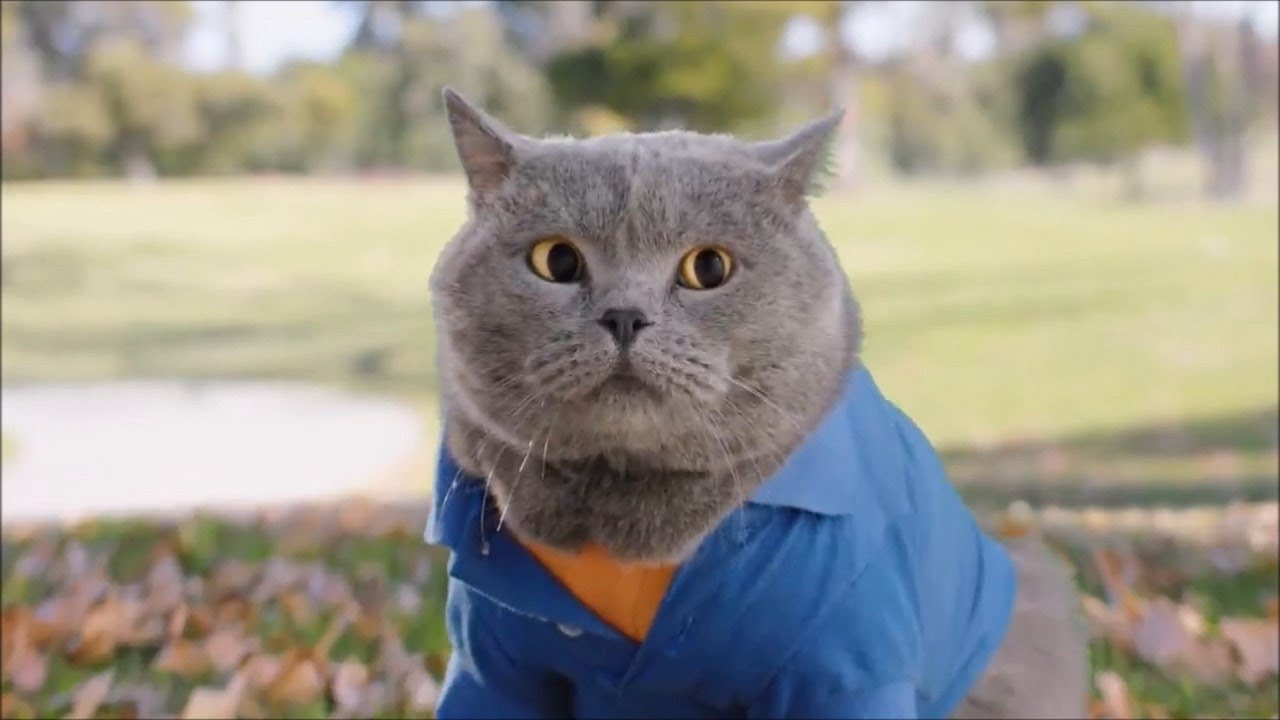 Aaron's Animals NEW VIDEO COMPILATION 2021
