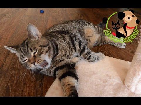 Как избавиться от запаха из пасти у кошки