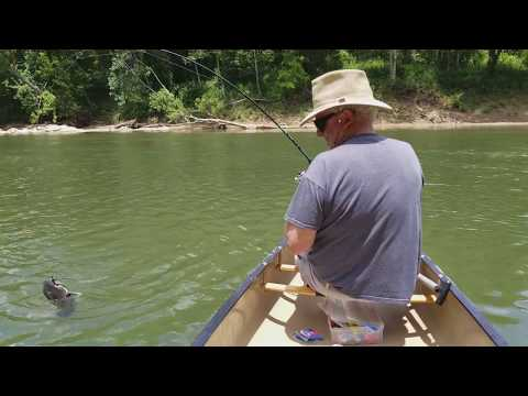Ouachita River Catfish