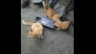 рыжие котята пушистики