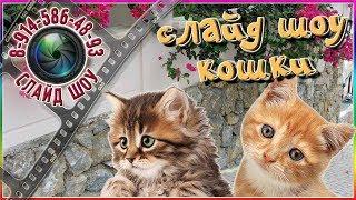 Слайд шоу кошки 🐱 ВНИМАНИЕ 🐱 Нашествие кошек