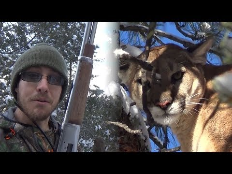 Mountain Lion Hunt With A Rossi Lever Action Rifle