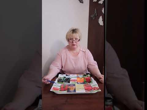 Когда сажать на рассаду томаты, перцы, баклажаны в Санкт-Петербурге и Ленинградской области. 16+