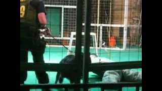 Big Cat Habitat And Gulf Coast Sanctuary - Police K-9 Dogs Attack
