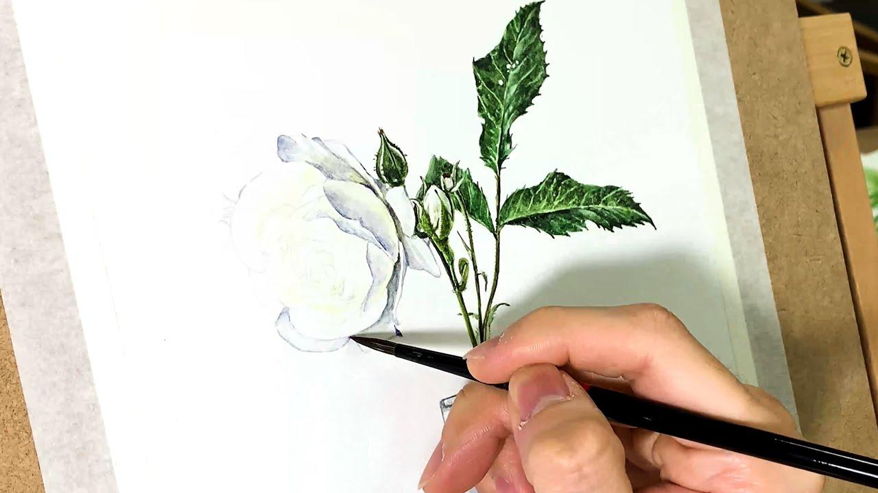 흰 장미를 수채화로 그려보자!! (스피드 페인팅 Rose drawing)