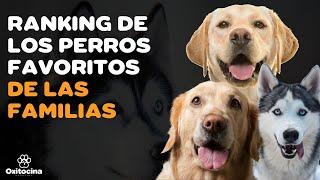 TOP 15 DE LAS RAZAS DE PERROS  POPULARES