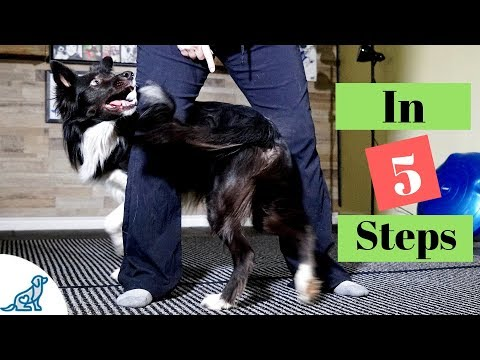How To Teach Your Dog To Weave Through Your Legs - Professional Dog Training Tips