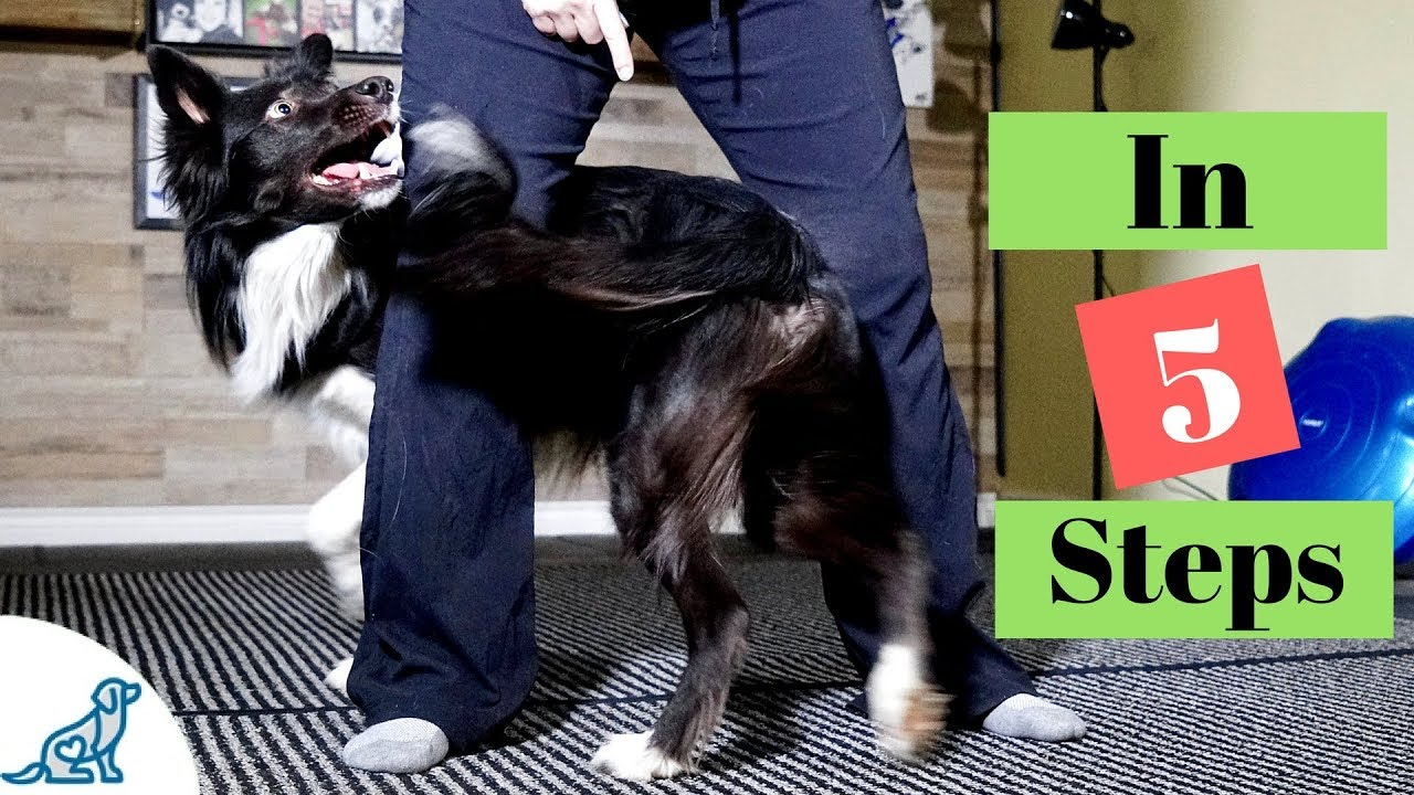 how to teach your dog to weave