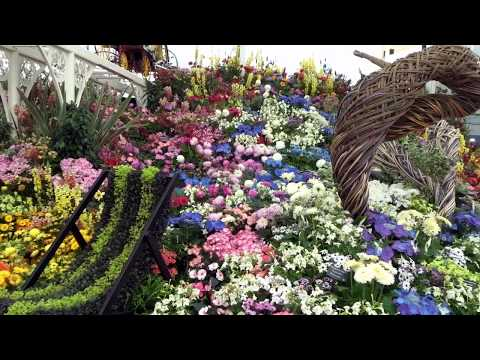 Study Abroad: visiting Chelsea Flower Show, London