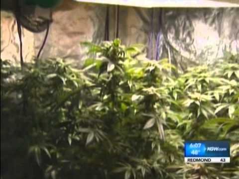 Congressman Earl Blumenauer (OR-3): A Federal Marijuana Policy for This Century - KGW