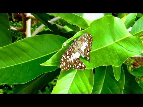 Butterfly Garden and Beautiful Flowers/ Natural Garden for Butterfly