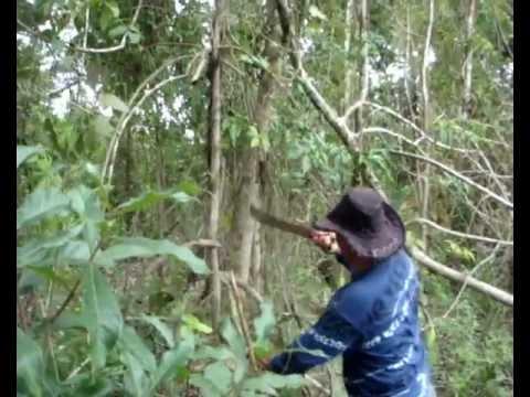 """Пираньи на Амазонке """"BubuCoca"""""""