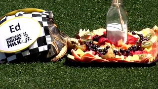Turtles hit the track for the Zoopolis 500