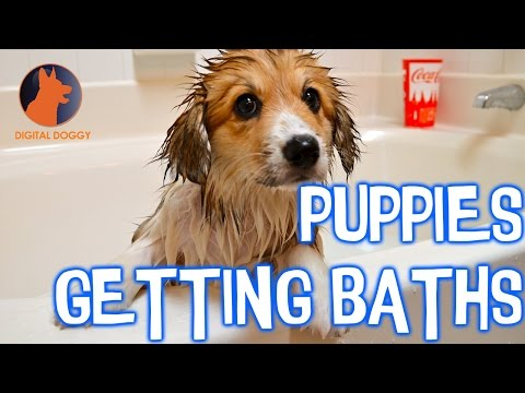 Aww! Watch these cute puppies get baths!